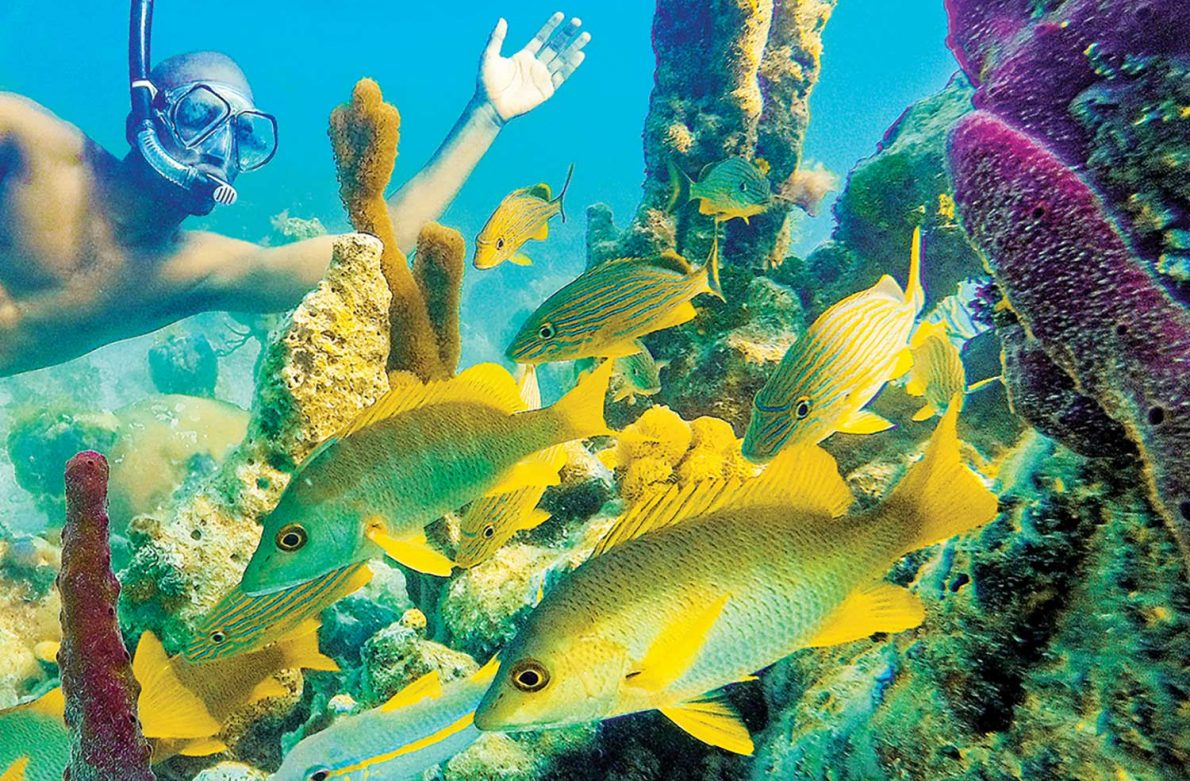 under the sea: the beauty of snorkeling