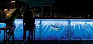 Like an underwater dream world, DeCamp's work comes alive in the night time, swimming realistically under the glow of LED lights at Mis Amigos.